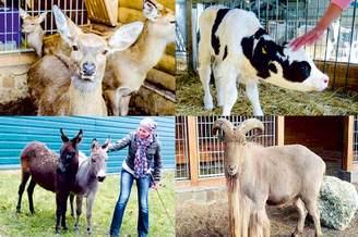 Межигорская ферма